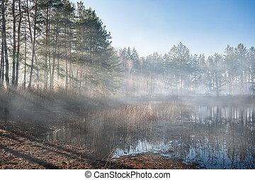 Landscape with Morning Fog