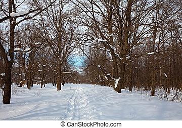 oak forest in winter