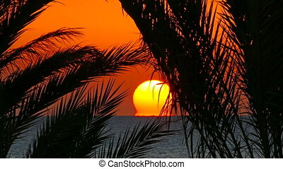 landscape with palms and sunrise over sea