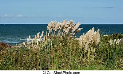 Landscape with Pampas Grass on the coast