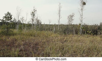 perennial grasses growing on wetlands - Landscape with...