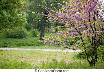 landscape with Redbud Tree
