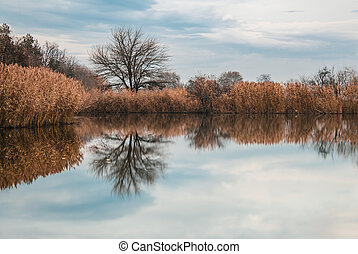 Landscape with reflection of tree in the lake
