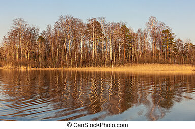 reflections on a forest lake