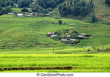 Landscape with rice fields in Vietnam