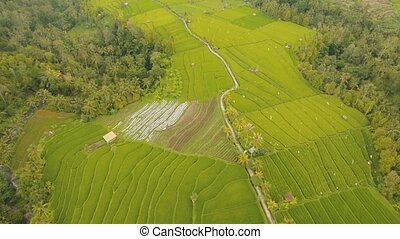 Landscape with rice terrace field Bali, Indonesia - Rice...