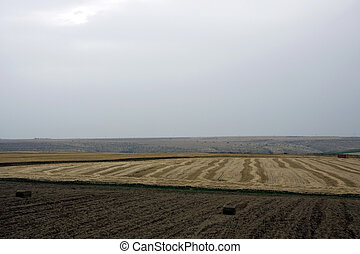 Landscape with rural field