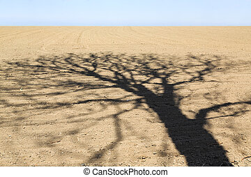 Landscape with shadow of tree