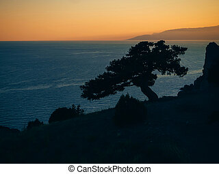 landscape with silhouette of pine trees on edge of a mountain overlooking the sea