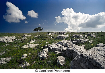 Landscape with single tree