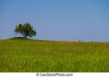 Landscape with single tree on hill, green meadow and blue sky