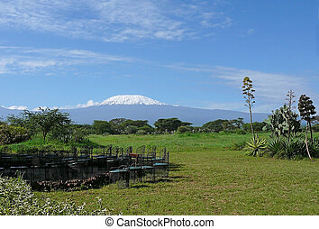 Kilimanjaro in Kenya - Landscape with snow-covered peak of...