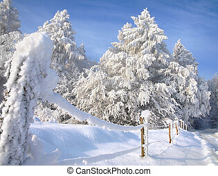 Landscape with snowy forest.