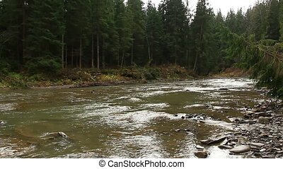 mountainous river in the forest of Carpathian mountains -...