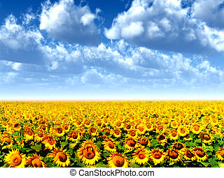 sun flowers - landscape with sun flowers and clouds