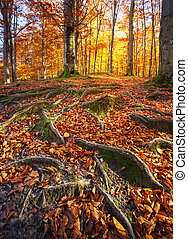 Landscape with the autumn forest. Strong roots of old trees. beautiful autumn tree.