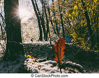 landscape with the first snow in the autumn forest on a sunny morning