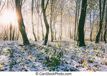 landscape with the rays of the rising sun and the first snow in the autumn forest