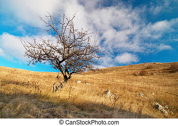 Landscape with tree and blue sky.
