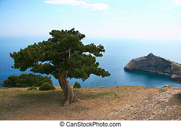 Landscape with tree at seaside on cloudy weather