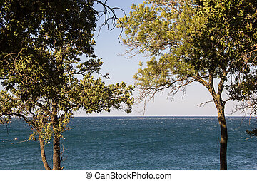 landscape with tree on the coast of Black sea in summer