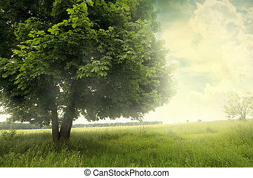 landscape with tree on the field