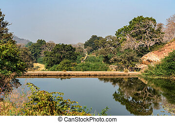 Landscape with trees and lake in Ranthambore, India