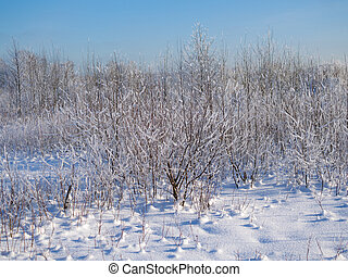 trees and plants in hoarfrost