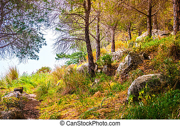 Landscape with trees and stones.