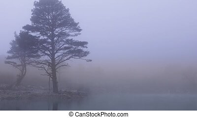 Landscape with trees covered with thick fog - Landscape with...