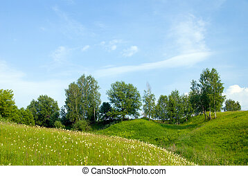 landscape with trees grass and blue sky 1