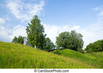 landscape with trees grass and blue sky 3