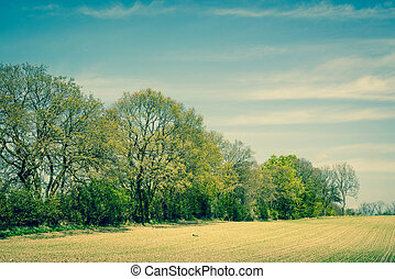 Landscape with trees on a field