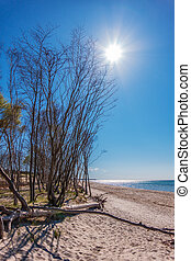 Landscape with trees on the Baltic Sea coast in Germany