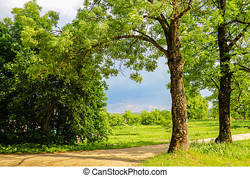 Landscape with trees on the field on a sunny day.