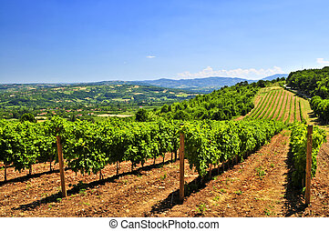 Landscape with vineyard - Summer landscape with vineyard in ...