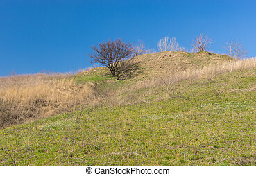 Landscape with wild apricot tree on a hill