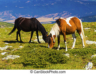Landscape with wild horses in the mountain