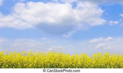 landscape with yellow flowers on bright sky background
