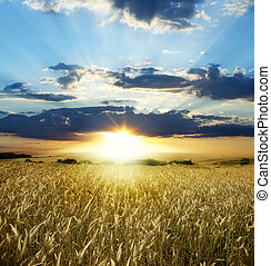 landscape - Yellow meadow under blue sky with clouds