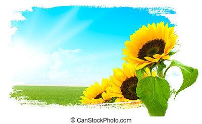 landscape, -, zonnebloemen, groene, land, blauwe hemel