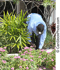 Close up of a landscaper taking care of flowers