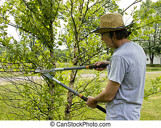 landscaper trimming trees