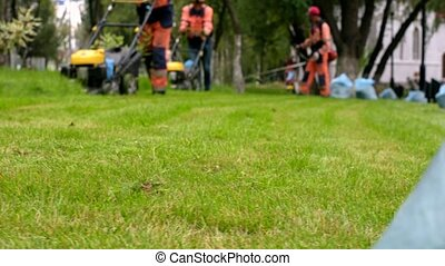 City workers in uniform with trimmer and lawnmower working...