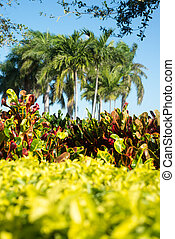Landscaping in Fort Pierce