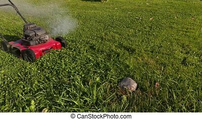 Landscaping worker remove stone from lawn