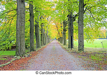 landschaft, niederlande, herbst