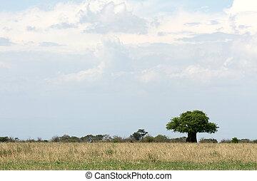 landschaft., tansania, afrikas, safari