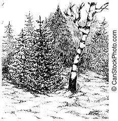landschaft., winter, darwn, hand, forest., vektor, schwarz, weißes, illustration.