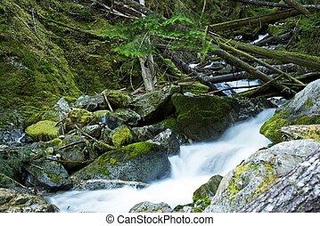 landschaftlich, moosig, montana, flüßchen